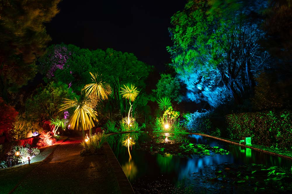Lily Ponds at the Enchanted Floodlit Gardens at Abbotsbury